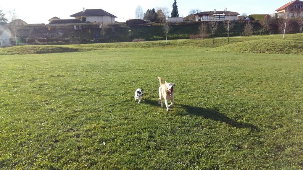 Une balle un champs= chiens heureux