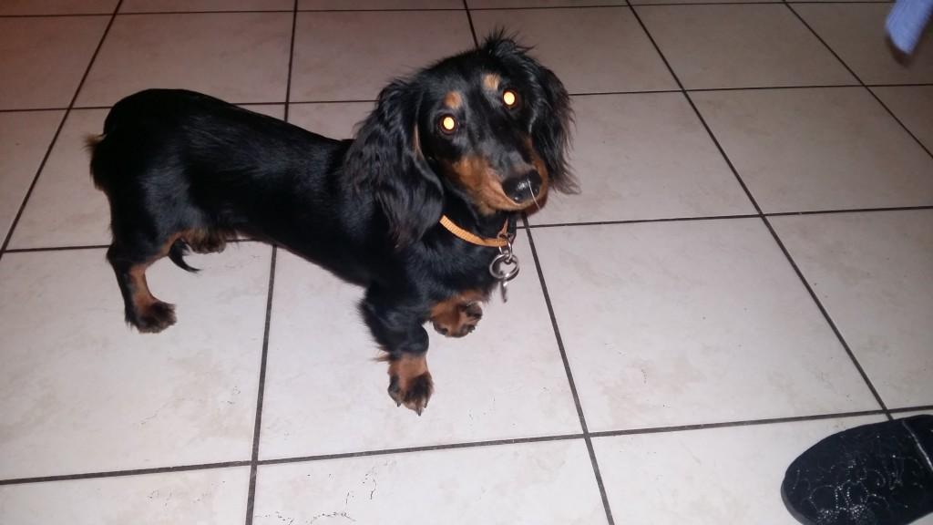 Lassy 5 mois un peu craintive mais adorable.